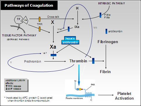 Pathways of Coagulation
